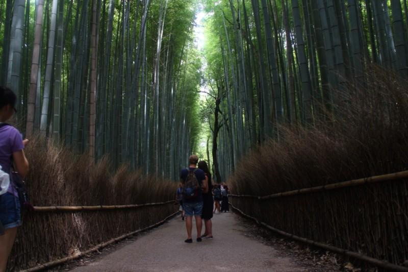 Jalan Jalan ke Jepang Murah