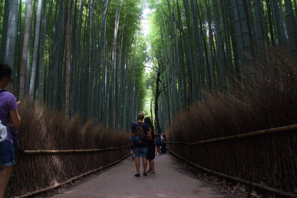 Tempat wisata di kyoto hutan bambu