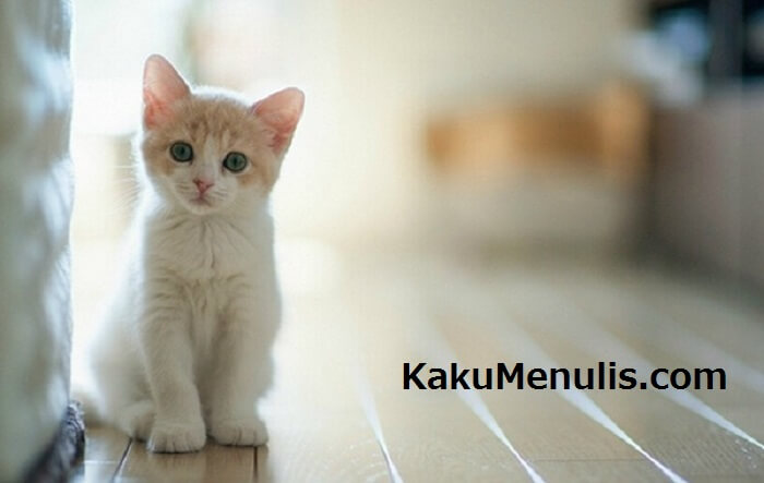 Negara Jepang Kucing