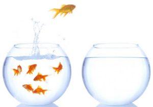 Cerita Motivasi Hidup Ikan Hiu