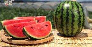 semangka dan musim panas di Jepang