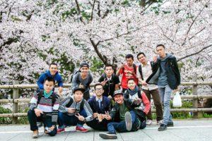 Bunga Sakura di Okazaki Kouen