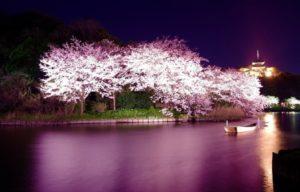 Yozakura atau bunga sakura di malam hari