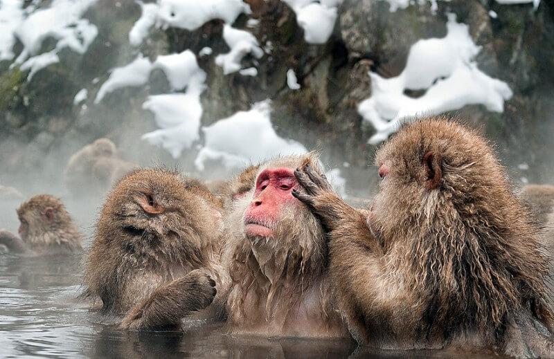 Musim Salju di Jepang Onsen