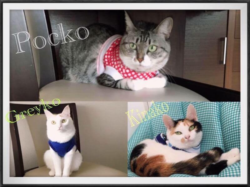 Sejarah Kucing Toko Paktua Desune