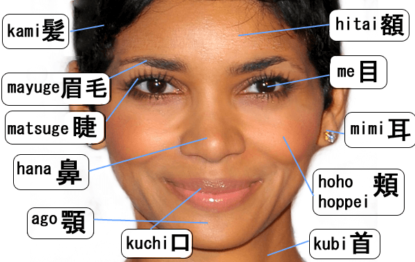 Kosakata Bahasa Jepang Badan