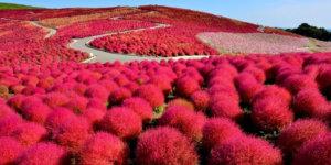 Kosakata Bahasa Jepang Warna