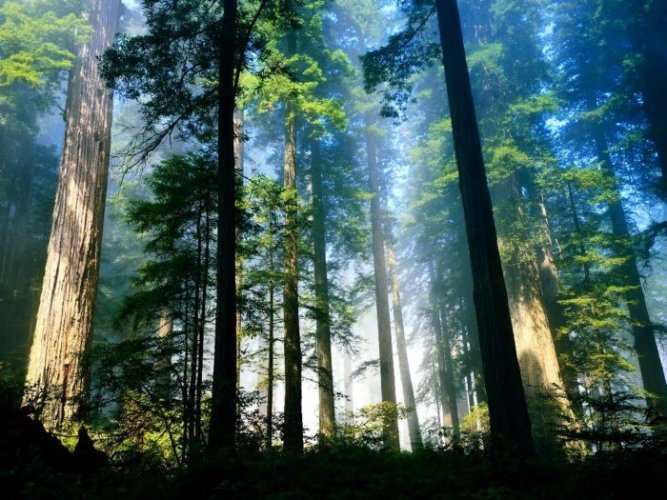 Arah Mata Angin Pohon