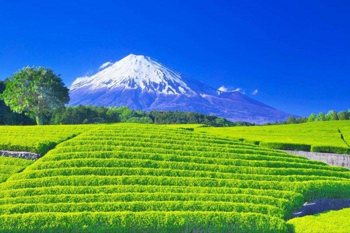 Biaya Hidup di Jepang Jalan