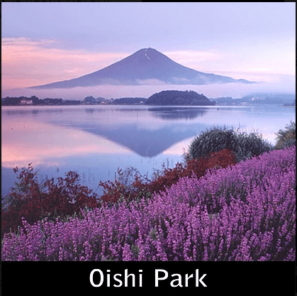 Paket Liburan ke Jepang Oishii Park